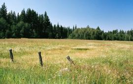 a mile or two outside of Fallen Leaf Lake, near South Lake Tahoe, CA