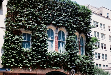 this is the top story of a building, i love that the vines are perfectly manicured around the edges of the windows