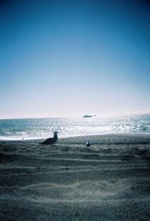 Goat Rock Beach, Bodega [Kodak Gold 200, taken with BlackBird Fly toy TLR]